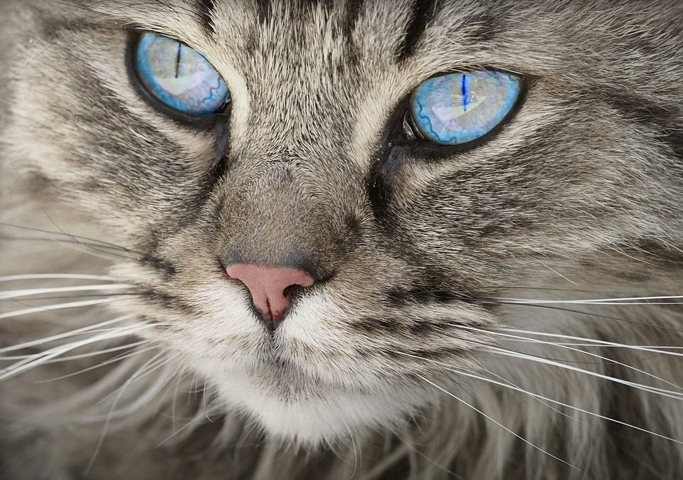 Tips para fotógrafos que desean capturar imágenes de mascotas